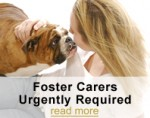 Click here to find out about Foster Caring