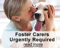 Foster carers save lives